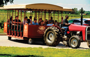 Pillitteri Winery Tours